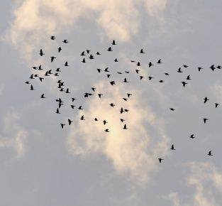 Vogelwelten in den Marchauen