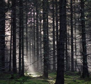 Ökologischer Fußabdruck und Naturverbindung